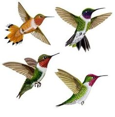 Amazon.com: Wild Life Animals Wall Sticker Mural Hummingbirds: Home & Kitchen