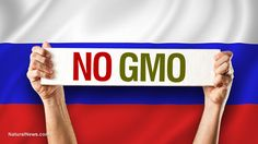 GMO crops totally banned in Russia... powerful nation blocks Monsanto's agricultural imperialism and mass poisoning of the population