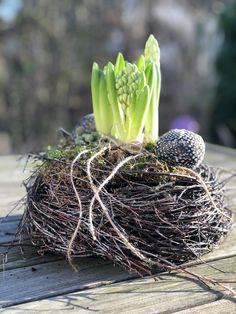 Spring nest De første forår blomstrere er allerede her! Pots, Kitchen Ornaments, Flower Oil, Potting Soil, Back Gardens, Spring Garden, Wedding Centerpieces, Indoor Plants, Shrubs