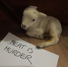 """MEAT IS MURDER!!! People need to make the connection that they are paying some lowlife person to brutally slaughter another living being for them to """"enjoy"""" a meal. What a fucked up unnatural, unnecessary and selfish act!!! Educate yourselves and you will become vegan without question. Period."""