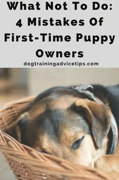 Having a dog or a puppy is a huge responsibility. Find out the 4 Mistakes Of First-Time Puppy Owners and what not to do. http://www.dogtrainingadvicetips.com/not-4-mistakes-first-time-puppy-owners