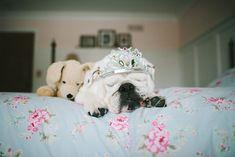 Bulldogge Lola-vitalmag3