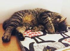 Katzenkissen Bean Bag, Cats, Happy, How To Make, Animals, Tomy, Handmade, Pet Dogs, Gatos
