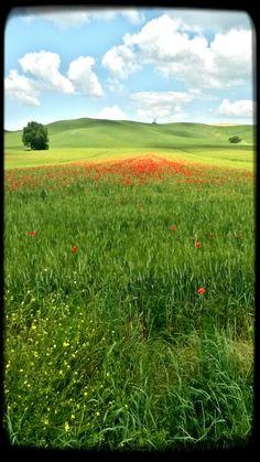 campi nei pressi di località San Fabiano( dove Monet dipingeva,  qui si fa uno scatto...)