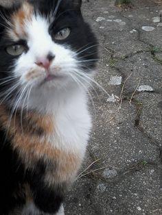 CAFER - vedette de notre CONCOURS Photo mensuel chat, chien, animaux. participez ici >> http://www.verlina.com/concours-photo.php