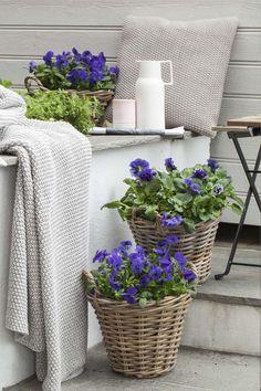 Lilla viola passer fint sammen med gul påskestemning. Porch Veranda, Pots, Scandinavian Style, Fall Decor, Hydrangeas, Home And Garden, Pergola, Landscape, Outdoor