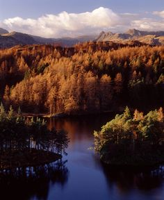 Tarn Hows, Lake District, England.