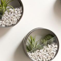 DIY Terrarium Magnets
