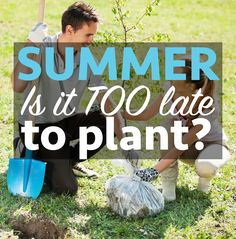 Learn how to protect young plants from extreme summer conditions.