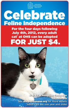 Adoption special on adult #cats runs through Sunday, July 8!