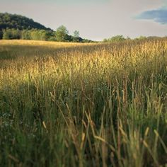 Hayfield catching the sunset #vt #farming #vermont #soVT #grassfed #sustainablefarming