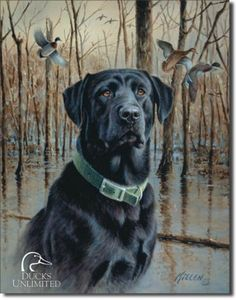 This tin sign shows a black lab focused in on the hunt. Mallard ducks are flying through the flooded timber behind the dog. It's subtle colors and careful design makes for a fun housewarming or weddin