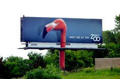 "Milwaukee zoo billboard with massive flamingo. ""Meet me at the zoo"" Guerilla Marketing, Street Marketing, Creative Advertising, Marketing And Advertising, Advertising Design, Design Thinking, Milwaukee Zoo, Me At The Zoo, Funny Billboards"