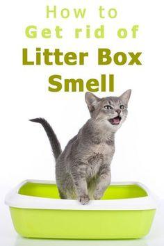 Litter Box Smell, Diy Litter Box, Best Litter Box, Cleaning Litter Box, Remove Cat Urine Smell, Cat Pee Smell, Cat Urine Smells, Cat Having Kittens, Cat Urine Remover