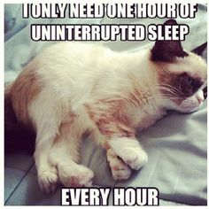 Hilarious grumpy cat, funny grumpy cat, grumpy cat jokes ...For more funny photos and humor quotes visit www.bestfunnyjokes4u.com/rofl-best-funny-joke-pic/