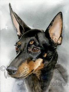 manchester terrier dog toy in Toys and Games Watercolor Animals, Watercolor Art, Watercolor Illustration, Toy Manchester Terrier, English Toy Terrier, Charro, Yorkshire Terrier Dog, German Shorthaired Pointer, Terrier Dogs
