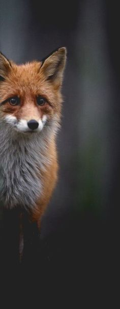 foxy                                                                                                                                                                                 More