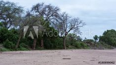 Stock Video of Loop of A static timelapse of a dry river bed with large trees and green vegetation at the start of summer with elephants passing through. Loop 2 of at Adobe Stock Dry River, Stock Video, Elephants, Stock Footage, Adobe, Country Roads, Trees, Explore, Landscape