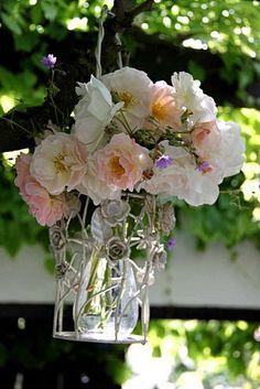 Rose Pénélope  Géranium pyrenaicum Summer Sky