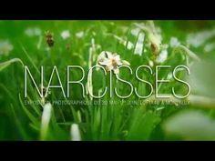 Narcisses! Photo Expo Montreux 1 Photo Expo, Switzerland, World, Youtube, The World, Youtubers, Youtube Movies