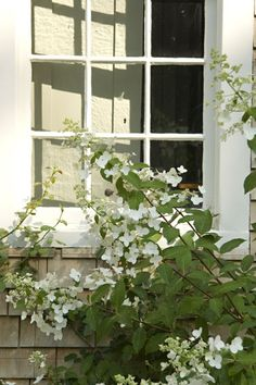 A Whitewashed House