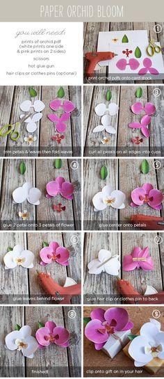 orchideas