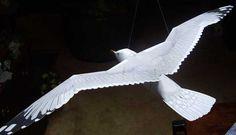 Bilderesultat for seagull tail
