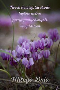 Vizsla, Good Morning, Plants, Wednesday, Buen Dia, Bonjour, Plant, Good Morning Wishes, Planets