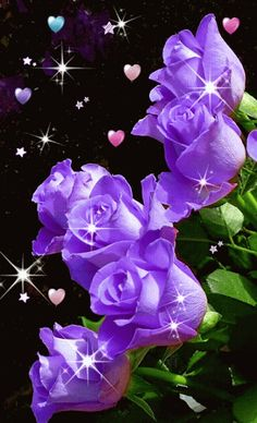 Here's what we found about purple flowers. Read up the info about purple flowers, and learn more about it! All Flowers, Amazing Flowers, Beautiful Roses, My Flower, Beautiful Flowers, Lavender Roses, Purple Roses, Rose Violette, Love Rose