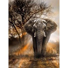 Elephant Rising - 5D Diamond Painting