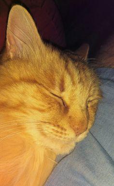 Plumpkin! Rusty is one of my favorite kitties, ever!
