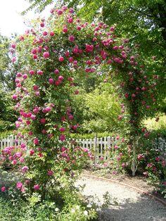 Staketenzaun h he 50cm staketenabstand 5cm staketenzaun zaun gartenzaun graenshop f r - Gartenzaun dortmund ...