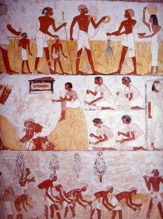 Scene Of The Grain Harvest, Accounting & Tax Collecting  --  From The Theban Tomb of Menna, Dynasty 18, Reign of Amenhotep II  --  1400-1352 BCE