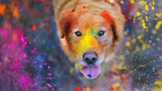 Holi, festival of colors, color your life, celebration of spring, India, hindu tradition, sentences, keep  calm and color your life