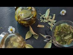 Ulei de frunza de dafin./Ceai Benificile ei.Este numită Planta Biblică.Tamadueste peste 5000de boli. - YouTube Natural Remedies, Youtube, Health, Nature, Cooking, Plant, Health And Wellness, Kitchen, Naturaleza