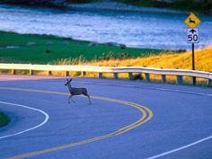 How to Avoid Hitting Deer?:
