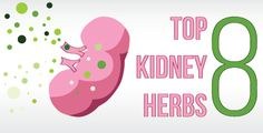 Top 8 Herbs for Kidney Cleansing
