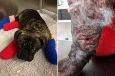 5-month-old puppy used as bait! Demand a crackdown on dog fights in Hull, United Kingdom! | YouSignAnimals.org
