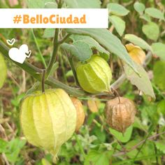 #BelloCiudad Bellisima, Cantaloupe, Fruit, Food, Cities, Essen, Meals, Yemek, Eten