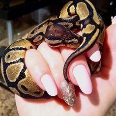 My baby Ball Python :)
