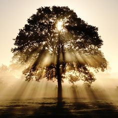 The morning sun streaming through the branches of a tree