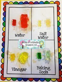 Teddy Bear Picnic Day: Gummy Bear Science Experiment (adding vinegar, baking soda, etc.)