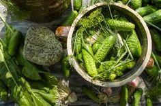 odrobaczanie układu pokarmowego - robaczyca