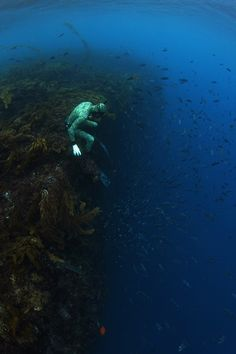 """coast of St. Croix aptly named """"The Wall."""" But at a certain point, the lush corals changes into a sharp and sudden drop"""