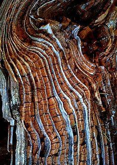 Inside of fallen tree