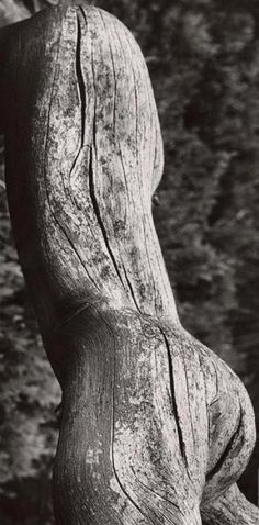Martin Martinček - Torse, 1962 Sculpture Art, Sculptures, Aging Wood, Black And White Pictures, Artsy Fartsy, Human Body, Les Oeuvres, Artwork, Nature