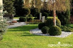 Ogród Dominiki - strona 195 - Forum ogrodnicze - Ogrodowisko