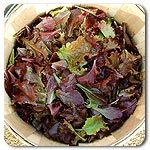 High Mowing: Organic Red Planet Salad Mix - An all-lettuce mix of mostly spectacular reds with just theright amount of green leaf mixed in to show them off. A great blend for spring or summer when colors will be their brightest. The mix includes: Red Salad Bowl, Lollo Rossa, Red Sails, Outredgeous, Rouge d'Hiver, Spock and Galactic.()    Days to maturity:28 days baby
