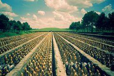 Terracotta army | The Forbidden Gardens in Katy, Texas. It i… | Flickr