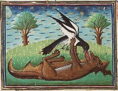 Medieval Bestiary : Fox. The image shows the fox who has lured the bird towards him by pretending to be dead. As soon as the bird alights on his body, the fox grabs the bird and eats it. TRICKSTER! :-)